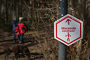 Walkers in woods that form part of the Foret de Soignes, on 25th March, in Everberg, Belgium. Forêt de Soignes or Sonian Wood is a 4,421-hectare 10,920-acre forest that lies at the south-eastern edge of Brussels, Belgium. The forest lies in the Flemish municipalities of Sint-Genesius-Rode, Hoeilaart, Overijse, and Tervuren, in the Brussels-Capital Region municipalities of Uccle, Watermael-Boitsfort, Auderghem, and Woluwe-Saint-Pierre, and in the Walloon towns of La Hulpe and Waterloo. Thus, it stretches out over the three Belgian Regions.