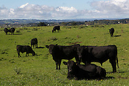 Otakanini Topu Incorporation, on the Kaipara Harbour near Helensville..Finalists in the 2011 Ahuwhenua BNZ Maori Excellence in Farming ,Sheep and Beef competition...John Cowpland.Alphapix.PO Box 876.Napier.New Zealand..Phone +64 6 8445334.Mobile + 64 272533464..info@alphapix.co.nz..www.alphapix.co.nz..Any images are copyright of Alphapix / John Cowpland..No images may be stored, manipulated, distributed or altered in any way, without written permission or license to do so.