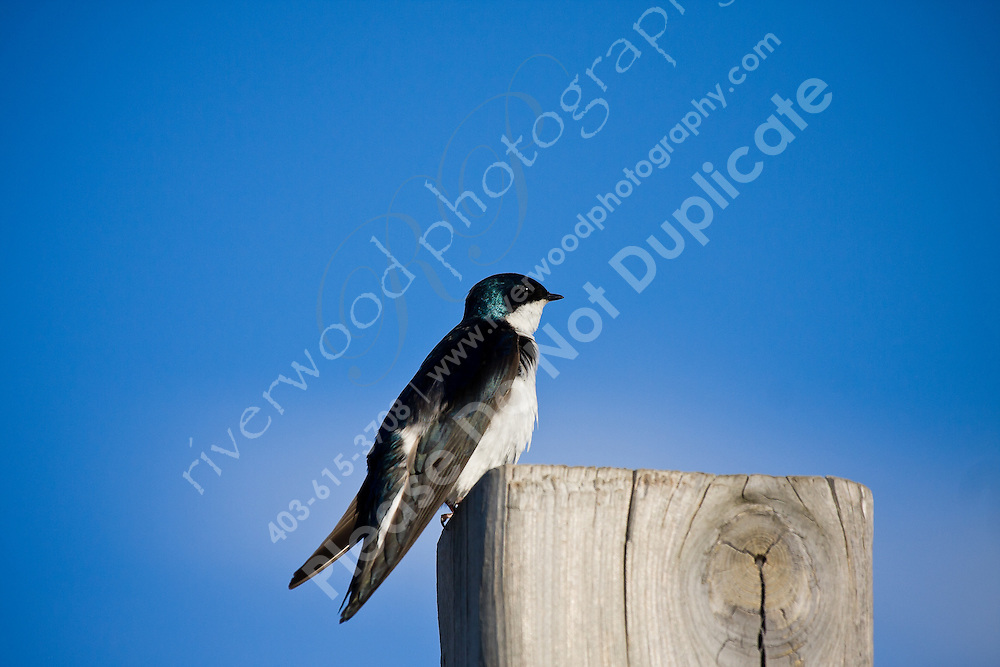 This little swallow completely ignored me as I got closer and closer...