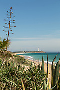 View of beach and sea with lighthouse in distance and succulent plants in foreground, Cadiz, Andalusia, Spain