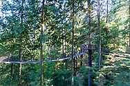 Capilano Treetop Adventure, Vancouver, British Columbia, Canada. Visitors can walk through the canopy via a series of foot bridges attached to tree girdles that hold platforms high up in the doug fir and cedar forest.