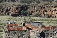 Kenya, region de Nakuru, parc national de Hell's Gate, zebre // Kenya, Nakuru county, Hell's Gate National Park, zebra