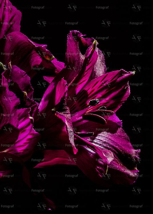 Alstroemeria aka Peruvian lilies as inspiration