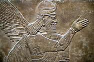 Assyrian relief sculpture panel of a protective spirit from Nimrud, Iraq.  865-860 B.C North West Palace, Room Z.  ref: British Museum Assyrian  Archaeological exhibit WA 118874 .<br /> <br /> If you prefer to buy from our ALAMY PHOTO LIBRARY  Collection visit : https://www.alamy.com/portfolio/paul-williams-funkystock/ancient-assyria-antiquities.html  Refine search by adding background colour, place, subject, museum etc into the LOWER SEARCH WITHIN GALLERY box to <br /> <br /> Visit our ANCIENT ASSYRIAN PHOTO COLLECTIONS for more photos to download or buy as wall art prints https://funkystock.photoshelter.com/gallery-collection/Ancient-Assyrian-Art-Artefacts-Antiquities-Historic-Sites-Pictures-Images-of/C0000cjRqQyJjLag