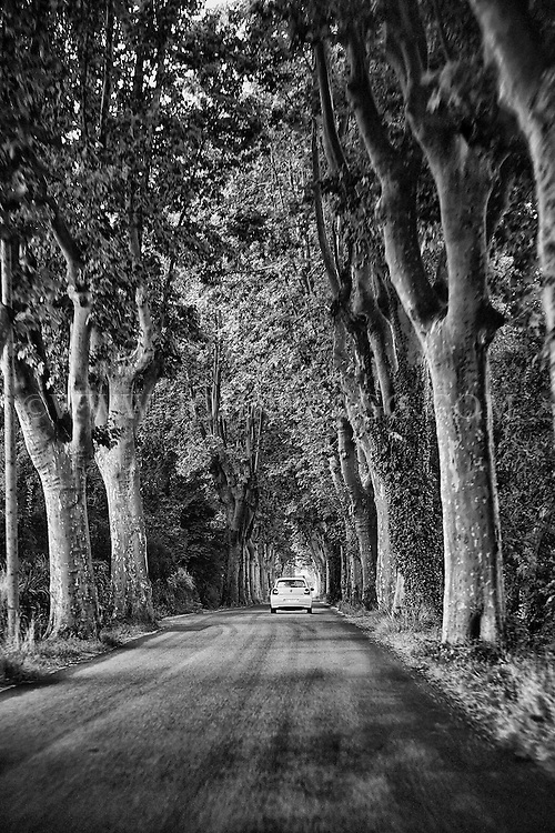 Black and white view of a tree lined road heading into Provence, France