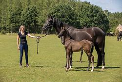 Paige Perfect vh Trichelhof, Bries Karen<br /> het Trichelhof - Eindhout 2020<br /> © Hippo Foto - Dirk Caremans<br />  13/06/2020