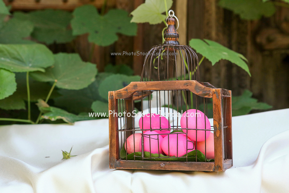 red hard boiled eggs (dyed with beetroot) in a birds cage. A good start for Easter eggs (dyed with beetroot) This image has a restriction for licensing in Israel