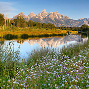 The Grand Teton Mountains reflect in Beaver Pond at Schwabacher Landing in Grand Teton National Park, Wyoming.