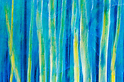 Aspen trees abstracted. Waterton Lakes National Park
