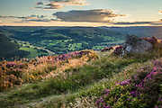 Blossoming heather and glowing grasses atop Millstone Edge, with distant views over the Derwent & Hope Valleys. Golden light warms this summer sunset scene in Derbyshire, Peak District, England, UK.