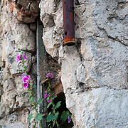 MOSTAR, BOSNIA AND HERZEGOVINA - JUNE 28:  Flowers bloom from a  building damaged during the 1993 war is seen during sunset on June 28, 2013 in Mostar, Bosnia and Herzegovina. The Siege of Mostar reached its peak and more cruent time during 1993. Initially, it involved the Croatian Defence Council (HVO) and the 4th Corps of the ARBiH fighting against the Yugoslav People's Army (JNA) later Croats and Muslim Bosnian began to fight amongst each other, it ended with Bosnia and Herzegovina declaring independence from Yugoslavia.  (Photo by Marco Secchi/Getty Images)