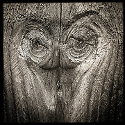 Faces series, fine art photography by ETS