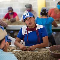 Virginia de Jesús Márquez Márquez, 23, works selecting coffee in the CARUCHIL cooperative.
