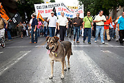 Teachers demonstrate against austerity measures and planned education reforms in Athens, and in support one of a few demo dogs. The demonstration is against an education reform bill which aims to improve the operation of universities.