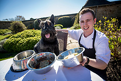Hamish, the Commonwealth Scottie Dog, with head chef Lee Laurie, trying out the Chez Roux dog menu at Greywalls Hotel & Chez Roux, Gullane. l-r Ground turkey, sweet potato and porridge stew; the salmon, mackerel, spinach and brown rice risotto; the Chicken liver, Beef and bean meatloaf with jelly.