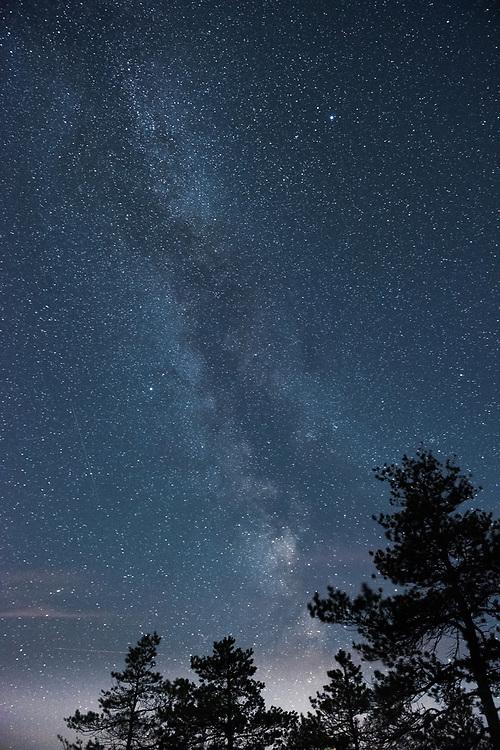 Milky Way in the night sky with several pine tree tops, Kemeri National Park (Ķemeru Nacionālais parks), Latvia Ⓒ Davis Ulands | davisulands.com