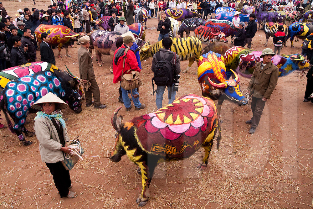 Painted buffalos with the crowd around looking at artworks. Buffalo Painting Festival near Phu Ly, Vietnam.