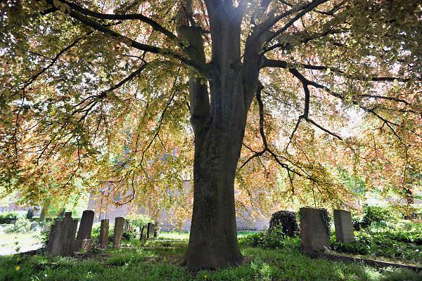 Nederland, Beek-Ubbergen, 7-5-2012Grafzerken onder een grota boom op de oude begraafplaats.Foto: Flip Franssen