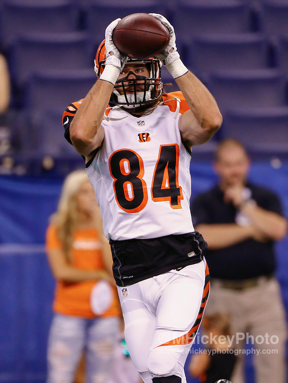 INDIANAPOLIS, IN - SEPTEMBER 3: Jake Kumerow #84 of the Cincinnati Bengals warms up before the game against the Indianapolis Colts at Lucas Oil Stadium on September 3, 2015 in Indianapolis, Indiana. (Photo by Michael Hickey/Getty Images) *** Local Caption *** Jake Kumerow