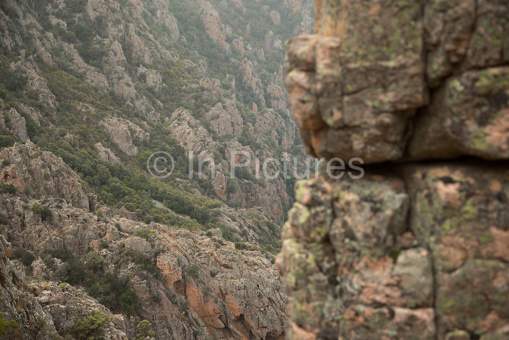 Green lichen, which covers this mountain landscape of the Calanques de Piana gold and pink coloured granite rock formations formed by wind and rain erosion creating dramatic cavities as they descend into the sea at the gulf of Porto, on 11th September 2017 in Piana, Corsica, France. Corsica is an island in the Mediterranean and one of the 18 regions of France. It is located southeast of the French mainland and west of the Italian Peninsula.