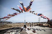 Carp streamers were put up for upcoming children's day in the middle of the ruined town in Ishinomaki city.