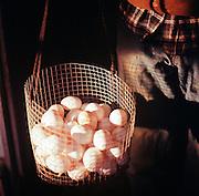 Fresh eggs from Meyers Farm in Bethel, Alaska. 2011