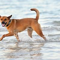 Nikon (The Awesome Dog!)