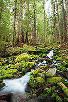 Small creek along the Sol Duc River trail on the way to Sol Duc Falls, Olympic National Park, WA.