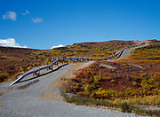 Trans-Alaska Pipeline climbing hill with autmn colors above the Delta River, Alaska.