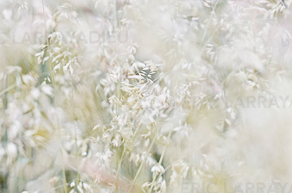 wheatfield (detail)