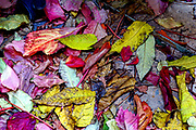 Colourful autumn leaves on the ground