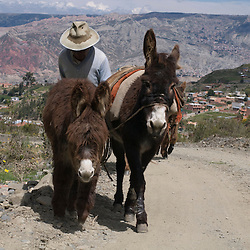 Bolivia Bolivia - Just outside of La Paz, Bolivia on a hiking excursion to the Valley of the Spirits, La Paz, and Ruxandra Guidi share a path with a Bolivian guiding his mules.  Photo by Susana Raab, guide Fernando Rielo, left