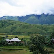 Rice paddies, Lao Chai valley (Sapa, Vietnam)