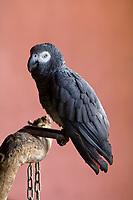 Parrot, Hoedspruit Endangered Species Centre, near Kruger National Park, South Africa