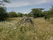 An old Hadza camp - all that is left behing is this house structure made of branches. Senkele.
