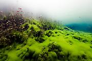 México, Quintana Roo. Water plants at cenote Car Wash.
