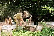 Rick Sutton, owner of Sutton Honey Farms in Lancaster, Ky., treats hives for mites in a bee yard at the Old Crow Inn and Chateau du Vieux Corbeau Winery, Tuesday, Sept. 8, 2020 outside Danville, Ky. (Photo by Brian Bohannon)