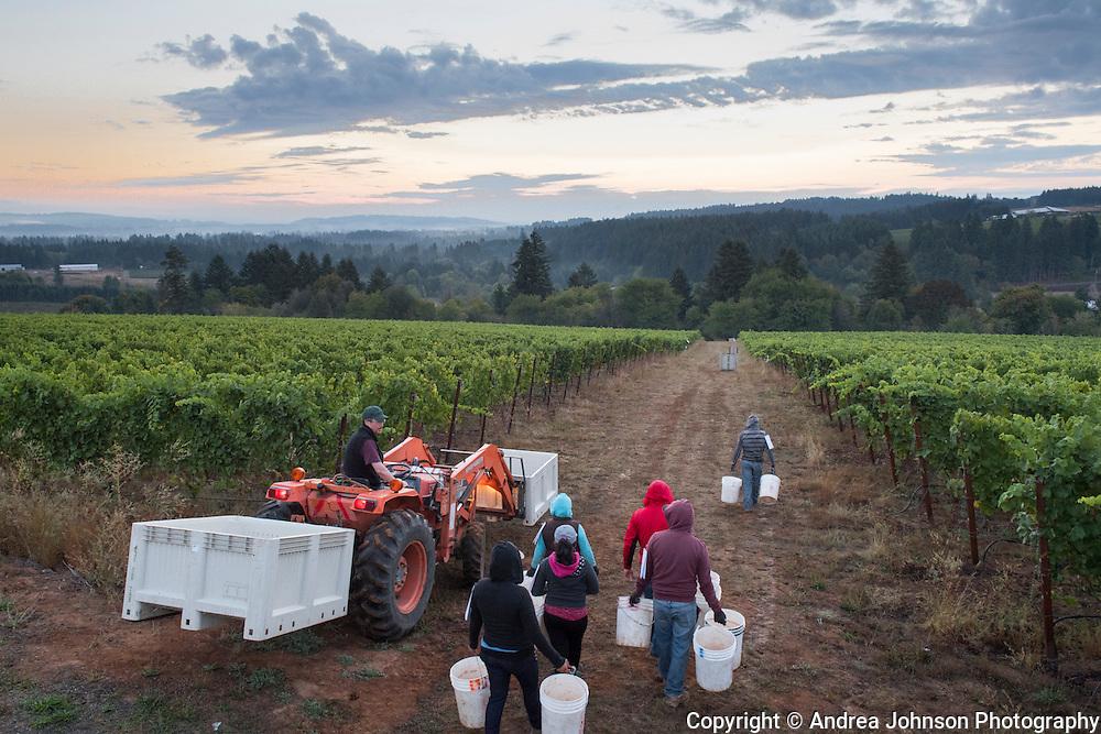 Scott Shull, Raptor Ridge winery and estate vineyard, Chehalem Mountains ava, Willamette Valley, Oregon