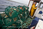 Local fisherman Neil Cameron hauls up creels filled with Velvet and Green Crab between Fionnphort and Iona, Isle of Mull, Scotland. The contents of 500 creels is taken every week by truck and sold to Spain. On each line are 25 creels that are spaced out in different areas of the nearby bays. The main fishing on the Ross of Mull, Ulva Ferry and Tobermory is now is commercial shell fishing with baited traps(creels) for lobsters (homarus gamarus), edible brown crabs( cancer pagurus), Prawn (Norwegian Lobster) and velvet swimming crab (necora puber). Scallop dredgers and Prawn trawlers also operate from both ends of the island, dragging the seabed for their catch. Before the late 1960s shell fishing with creels was generally carried out on a seasonal or part time basis allied to crofting, farming or another shore based job. Small boats today still operate this way.