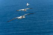 Birding Photographs from Quebéc, Canada