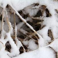USA, Illinois, Oak Brook. Snow on prairie grass.