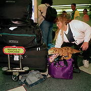 A woman airline passenger gathers up baggage and a toy dinosaur in the airport terminal at Chicago-O'Hare airport, Illinois, USA.