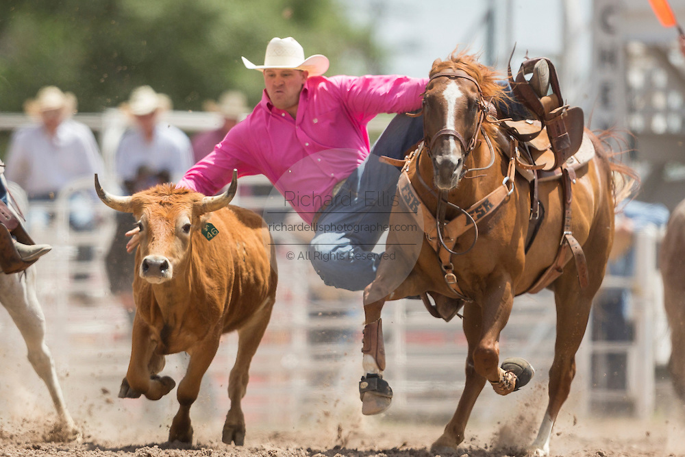 Steer Wrestler Will Lummus of West Point, Mississippi, grabs the horns of a steer at the Cheyenne Frontier Days rodeo at Frontier Park Arena July 24, 2015 in Cheyenne, Wyoming. Frontier Days celebrates the cowboy traditions of the west with a rodeo, parade and fair.