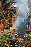 Lan Guihua, a widowed farmer, prepares a chicken for her guests and neighbors at her home in Ganjiagou Village, Sichuan Province, China.  (She is featured in the book What I Eat: Around the World in 80 Diets.) The caloric value of her day's worth of food on a typical day in June was 1900 kcals. She is 68 years of age; 5 feet, 3 inches tall; and 121 pounds. Her farmhouse is tucked into a bamboo-forested hillside beneath her husband's grave, and the courtyard opens onto a view of citrus groves and vegetable fields. Chickens and dogs roam freely in the packed-earth courtyard, and firewood and brush for her kitchen wok are stacked under the eaves. Although homegrown vegetables and rice are her staples, chicken feathers and a bowl that held scalding water for easier feather plucking are clues to the meat course of a special meal for visitors. In this region, each rural family is its own little food factory and benefits from thousands of years of agricultural knowledge passed down from generation to generation.