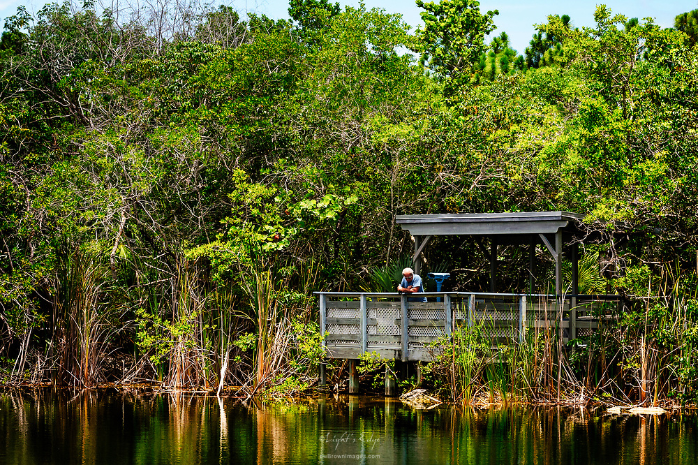 A gentleman stands looking over the side of the oberservation deck at The Blue Hole on Big Pine Key in Florida. The spot is used to watch alligators but none were seen by us that day and a man that deals with crocodile removals said that the shallow water by the deck was probable too warm at this time of year for them to hang there .