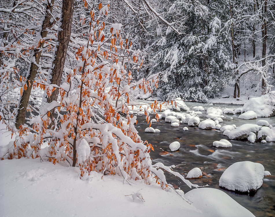 Deerfield River in winter with fresh snow, Mohawk Trail State Forest, Charlemont, MA