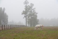 white horse grazing in a field