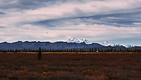 Mount Denali from the Alaska Railroad Train. Image taken with a Nikon D3x camera and 45 mm f/2.8 PC-E lens (ISO 100, 45 mm, f/8, 1/1000 sec).