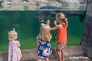 children admire KP2 or Ho'ailona, a young male Hawaiian monk seal, Monachus schauinslandi ( endemic and critically endangered species ) Waikiki Aquarium (c), Honolulu, Oahu, Hawaii, U.S.A.