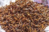 roasted cricket insects local  street food at Yangon (Rangoon) in Myanmar (Burma)